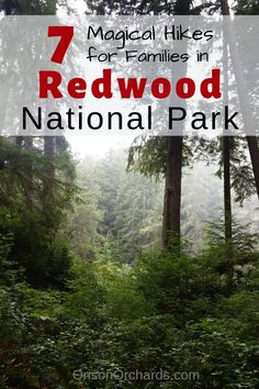 Headed to Redwood National Park? This itinerary can help you plan your trip, so that your family can have fun learning and create wonderful memories together! California National Parks, California Dreamin', Northern California, Klamath California, Travel With Kids, Family Travel, Family Trips, Humboldt Redwoods State Park, Humboldt County