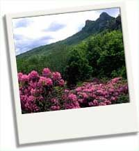 Great Smoky Mountains National Park Nature Information