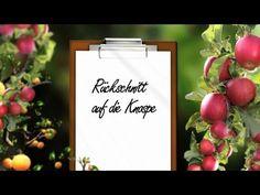 Obstbaumschnitt Der Kurs Theorie Kap. 9 Rückschnitt auf die Knospe - YouTube