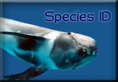 Spotted a cetacean but don't know what it was? Contact us!!