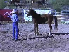 @Elizabeth TrippLunging a Yearling - Part One