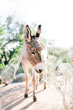 wedding burro with flower crown