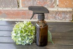 Homemade Potent Mosquito Repellent That Works Like Crazy