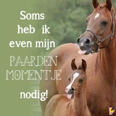 Soms heb ik even mijn paardenmomentje nodig! Animals And Pets, Cute Animals, Funny Horses, Cute Texts, Horse Quotes, T Shirts With Sayings, Horse Riding, Beautiful Horses, Happy Quotes