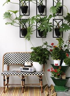 Black potted plants with black and white checkered bench @Coveteur