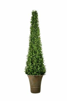 Cypress Topiary Trees