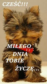 Weekend Humor, Cute Dogs, Good Morning, Fairy Tales, Diy And Crafts, Haha, Teddy Bear, Funny, Animals