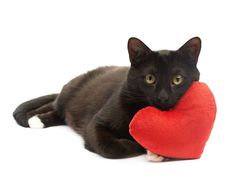 August is National Black Cat Appreciation Day! So, we're looking at 5 reasons we love black cats. Black Cat Appreciation Day, Living With Cats, All About Cats, Our Love, Holiday Fun, Mystery, Kitty, Black Cats, Mysterious