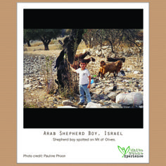 """This little Arab shepherd boy reminds us of King David who started out in a humble setting. Sheep and animals were """"currency"""" of worship during Old Testament, helping them to gain access to God. David as a child learnt how to care and protect """"worship"""" from the bears and lions. Perhaps a good reflection is how are we protecting our worship to God in our daily living. #wsxpolaroid #israel #jerusalem #jesus #wanderlust #bible #worship #kingdavid #sheep #shepherd #reflection"""