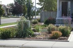 corner lot xeriscape; much smaller than ours but some ideas for layout