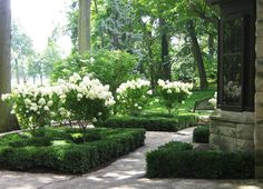 Boxwood hedge framing bed of hydrangea standards