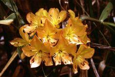 Nice flower. Papua, Indonesia.