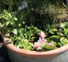 Put a Pond on Your Porch - could be good for our small garden, and using a deep bird table could make this the pond equivalent of raised beds!