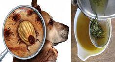 Conoce cuales son los mejores remedios caseros para evitar las garrapatas, pulgas o cualquier otro animal que se le quiera pegar a tu mascota