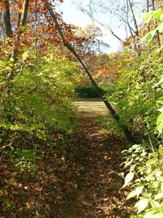 Hiking in Illinois isn't the most challenging, but it can be pretty.  Especially in fall.