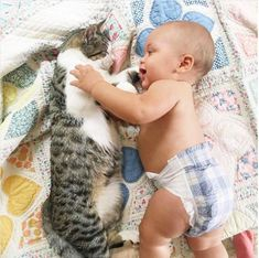 When you do finally bring your baby home youll want to give your cat some time to meet them. When you do finally bring your baby home youll want to give your cat some time to meet them. Kittens Cutest, Cats And Kittens, Ragdoll Kittens, Funny Kittens, Bengal Cats, White Kittens, Kitty Cats, Cute Funny Animals, Cute Baby Animals