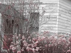 5 Ways to Tear Down Your Home - Kristy's Cottage Abandoned Houses, Abandoned Places, Old Houses, Haunted Houses, May We All, Tear Down, Places Of Interest, Photo Colour, Pretty In Pink