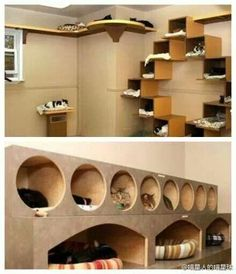 Cats Toys Ideas - This is currently my favorite and I want to do this. More - Ideal toys for small cats Ideal Toys, Cat Playground, Cat Shelves, Cat Enclosure, Cat Condo, Cat Room, Outdoor Cats, Pet Furniture, Small Cat