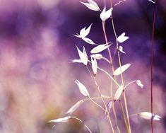nature photography grasses botanical photography by mylittlepixels