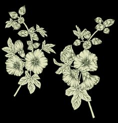 Hd Flowers, White Flowers, Black And White, Digital, Cards, Painting, Black N White, Black White, Painting Art