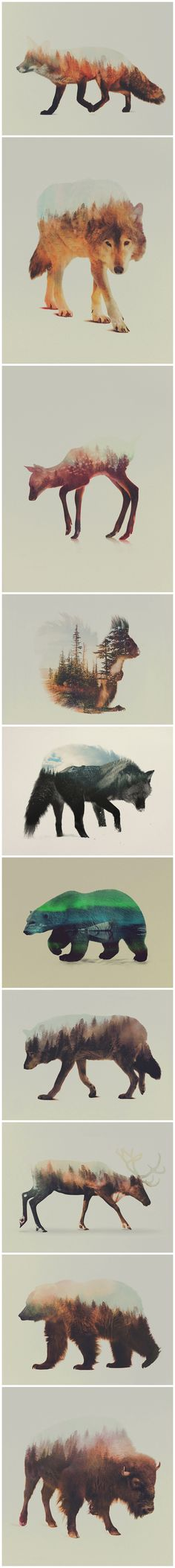 Double Exposure Animals by Andreas Lie - http://society6.com/andreaslie | https://www.facebook.com/Artbylie | http://artbylie.tumblr.com/