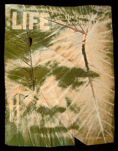 "Binh Danh & ""chlorophyll prints"" — photographs printed onto leaves using the sun."