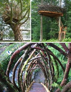 """Their beautiful creations branch out further than that, in some cases using bent wood, ivy, vines, nearby logs, twigs and branches, intertwining them on the fly into core parts of the eventual completed design."""