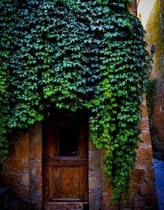 Hanging Vine, Civita Di Bagnoregio, Italy     photo via lonny