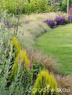 Zielonej ogrodniczki marzenie o zielonym ogrodzie - strona 746 - Forum ogrodnicze - Ogrodowisko