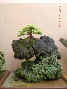 bonsai - container is important here and integral to the design