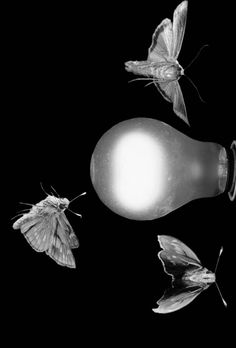 Phototaxis is an organism's automatic movement toward or away from light. Cockroaches are an example of a negatively phototactic organism. You've probably noticed how they scurry back into dark corners and crevices when you illuminate their late-night snacking party in your kitchen. Moths are positively phototactic.