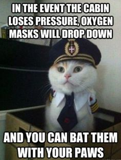 Captain Kitty here with some in-flight safety tips for you...