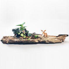 ウサギ rabbit /// 小さき冒険者。A small adventurer. /// 植物の寄せ植えの方法・やり方【 #succulents #plants #plantstyling #greenplants #terrarium #多肉植物 #寄せ植え #観葉植物 #ガーデニング 】