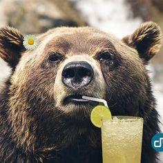 Wir wünschen Euch einen fröhlichen 1. April! Lasst Euch keine Bären aufbinden und kommt gut ins Wochenende!  #ersterapril #aprilapril #bär #funny #mood #instagood #picoftheday #igers #photo #bear #cute #bestoftheday #laugh #relax #goodtime  #digitalmobil #münchen #ulm  #digitalagency #agencylife #cro #socialmediamarketing #content #leads #digitalmarketing