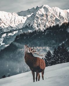 landscape-lunacy: Bayern Germany - by Daniel Weissenhorn Wallpaper Winter, Nature Wallpaper, Beautiful Creatures, Animals Beautiful, Cute Animals, Winter Forest, Winter Snow, Animal Photography, Nature Photography