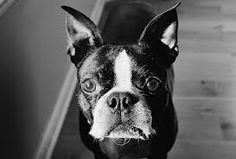 black and white photos of dogs - Google Search