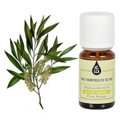 Huile essentielle Tea tree - HE Antibactérienne