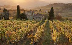 Chianti. Tuscany. Wine Regions | World Wine Regions | Rough Guides