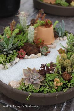 fairy garden version of succulent planter...! do something like this for christine, but with a pig figurine added. <3