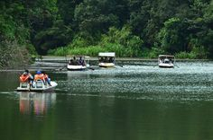 10 Top-Rated Tourist Attractions in Wayanad, Kerala Sea Level, Thing 1 Thing 2, Kerala, Top Rated, Fields, Attraction, Tourism, 10 Top, Travel