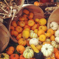 #farmersmarketnyc - Tucker Square Greenmarket via achoi12 on Instagram #FallforNewYork