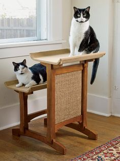 how to teach a cat not to scratch furniture