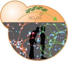 Yeast, human stem cells drive discovery of new Parkinson's disease drug targets