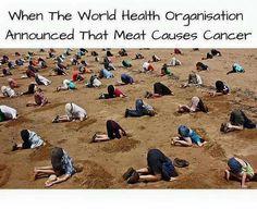 processed meat causes cancer ignoring the truth won't make it go away Vegan Facts, Vegan Memes, Funny Vegan Quotes, Vegan Funny, Why Vegan, Vegan Vegetarian, Vegan Food, Vegan Animals, Animals