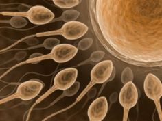 Male Infertility and the Semen Analysis