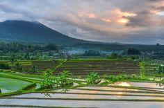 Balinesiske rismarker