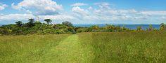 Panorama Tiritiri Matangi New Zealand by Joan Carroll  ||  Panorama Tiritiri Matangi New Zealand Photograph by Joan Carroll https://fineartamerica.com/featured/panorama-tiritiri-matangi-new-zealand-joan-carroll.html?utm_campaign=crowdfire&utm_content=crowdfire&utm_medium=social&utm_source=pinterest
