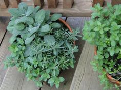 Herbs on the porch
