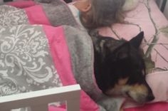 Devoted Dog Peacefully Naps With Toddler