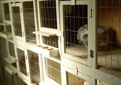 Individual Breeding Cages - simple design Pigeon Nest, Pigeon Cage, Pigeon Loft Design, Pigeon Pictures, Pigeon Breeds, Homing Pigeons, Palomar, Rabbit Cages, Nesting Boxes